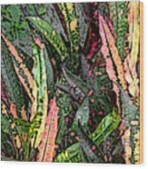 Croton 3 Wood Print by Eikoni Images
