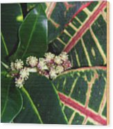 Croton Blooming Wood Print