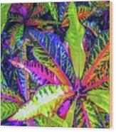 Croton Foliage Wood Print