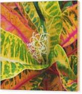Croton Leaves Wood Print