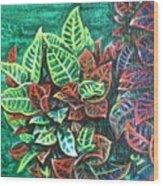 Crotons 3 Wood Print