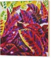 Crotons Sunlit 1 Wood Print