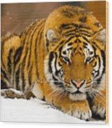 Crouching Tiger Wood Print