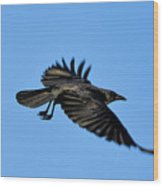 Crow Flyby Wood Print