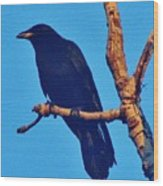 Crow In A Tree Wood Print