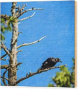 Crow In An Old Tree Wood Print