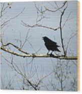 Crow In Sycamore Wood Print