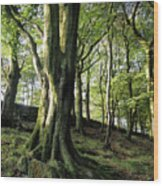 Crow Nest Woods Wood Print