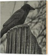 Crow Perched On A Old Column In Rain Wood Print