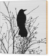 Crow Rook Perched In A Tree With Pare Branches In Winter Wood Print
