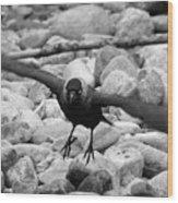 Crow Takes Off Wood Print