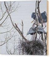 Crowded Nest Wood Print