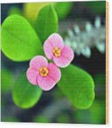 Crown Of Thorns Flowers Wood Print