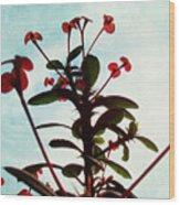 Crown Of Thorns Wood Print by Shawna Rowe