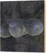 Crown Royal Saguaro Wood Print