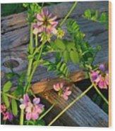 Crown Vetch 2 Wood Print