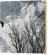 Crows In Cottonwoods Wood Print