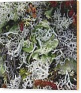 Crushed Lichen Wood Print