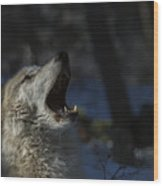 Cry In The Wild Wood Print