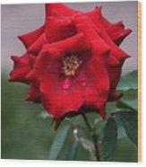 Crying Rose Wood Print