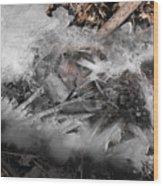 Crystal Clamshell Wood Print