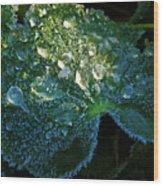 Crystal Lady's Mantle Wood Print
