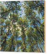 Crystal Lake Il Pine Grove And Sky Wood Print