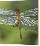 Crystal Wings Wood Print