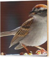 A Hungry Chipping Sparrow Wood Print