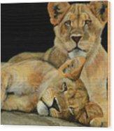 Cub Brothers Wood Print