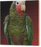 Cuban Amazon Parrot Wood Print
