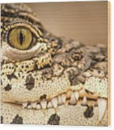 Cuban Croc Smile Wood Print