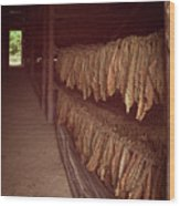 Cuban Tobacco Shed Wood Print