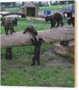 Cubs At The Playground Wood Print