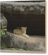 Cubs In Cave Wood Print
