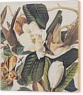Cuckoo On Magnolia Grandiflora Wood Print
