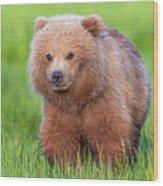 Cuddly Bear Cub Wood Print