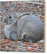 Cuddly Campground Bunny Wood Print
