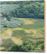 Cultivated Vineyards Tuscany  Italy Wood Print