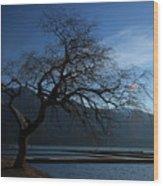 Cultus Tree Wood Print