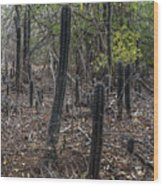 Curacao - Blooming Cacti In The Forest Wood Print