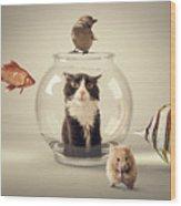 Curiosity Killed The Cat Wood Print