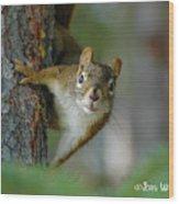 Curious Alaskan Red Squirrel Wood Print