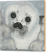 Curious Arctic Seal Pup Wood Print