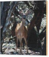 Curious Bambi Wood Print