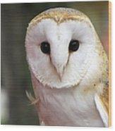 Curious Barn Owl Wood Print