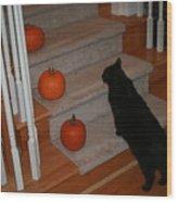 Curious Black Cat Wood Print