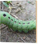 Curious Caterpillar Wood Print