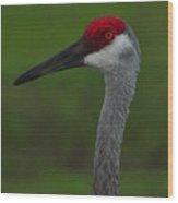 Curious Crane 2 Wood Print