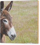 Curious Donkey Wood Print